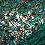 מה אפשר לעשות עכשיו עבור האוקיינוסים?