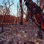 מה אפשר (וצריך) לעשות כדי להציל את היערות בדרום אמריקה?