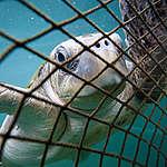 שמורות טבע ימיות יעצרו את דיג היתר המשתולל