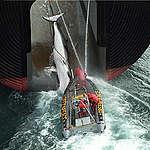 In difesa dei mari e delle balene