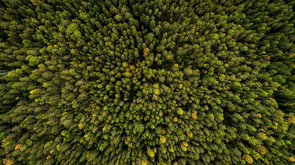 Forest West of Stor-Gravberget in Sweden. © Edward Beskow