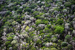 Amazon Rainforest Brazil. © Daniel Beltrá