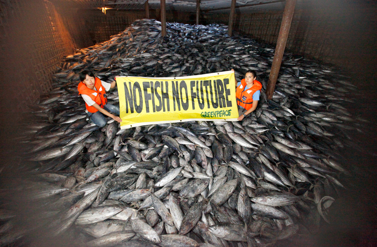 Illegal Pacific Tuna Transhipment. © Alex Hofford