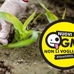 Greenpeace: la Commissione europea apre la porta ai nuovi OGM