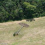 I cittadini europei non vogliono essere complici della deforestazione