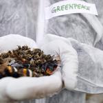 Bee day! Stiamo chiedendo all'Italia di difendere le api