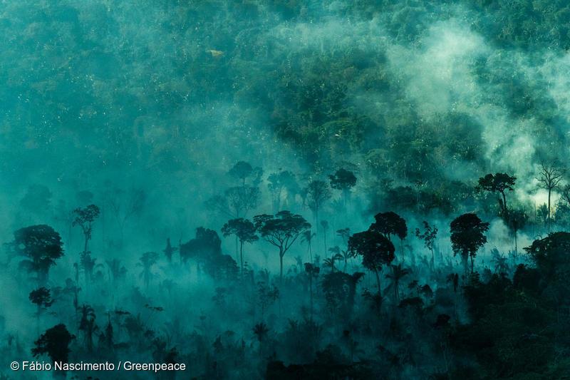 Incendi in Amazzonia - 2019
