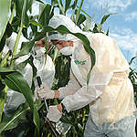OGM: la società civile e i produttori biologici e agroecologici bocciano il parere della Commissione Ue favorevole a una diversa normativa del settore