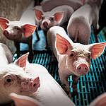 L'Ue spende milioni di euro l'anno per promuovere il consumo di carne