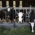 Transizione ecologica del sistema agroalimentare. Che ruolo hanno le lobbies dell'agricoltura intensiva?