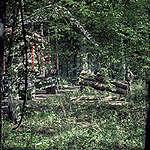 Białowieża, di nuovo a rischio ultimo lembo della foresta primaria europea