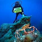 Greenpeace: dal Tirreno all'Adriatico, i cambiamenti climatici minacciano anche la biodiversità dei mari