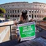 In piazza per difendere l'Amazzonia devastata dagli incendi!