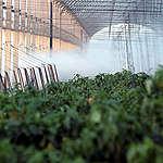 Messico finalmente libero da OGM e glifosato e Italia che resiste