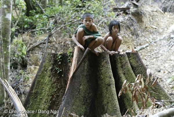 グリーンピース オリンピック委員会 熱帯林破壊