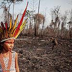止まらない森林火災の拡大が奪うもの