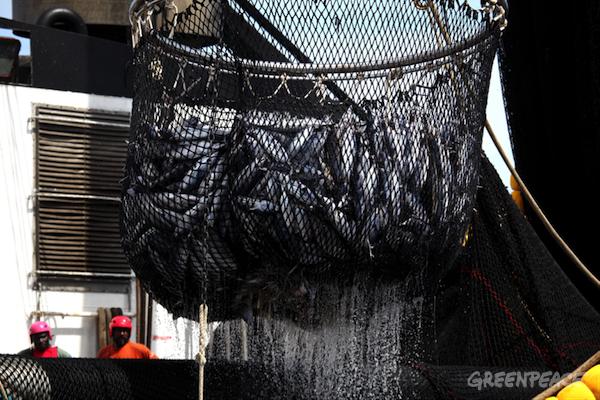 바다는 항상 건강하고 물고기는 언제나 무한정 잡을 수 있는 것은 아닙니다.