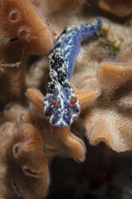 갯민숭달팽이2