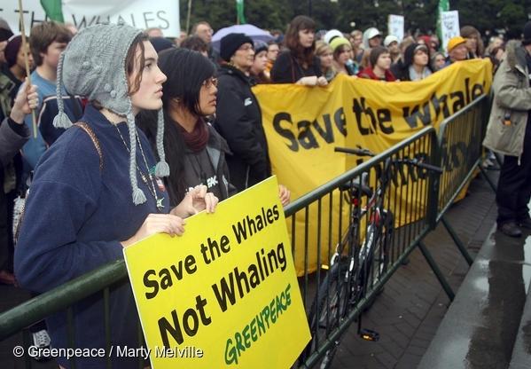 고래보호를 원하는 시민들