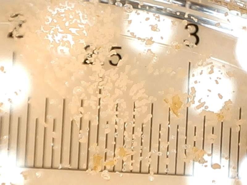 최근 국제 환경단체 그린피스는 국내외 22개 제품에 대해 정밀한 과학 실험을 실시했다. 그 결과 6개 제품에서 플라스틱 폴리에틸렌과 일치하는 입자의 파장이, 추가 4개 제품에서 미세 플라스틱일 가능성이 매우 높은 파장이 관찰됐다.
