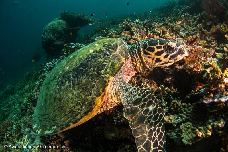 인도네시아 서 파푸아 지역 바닷속에서 헤엄치는 바다거북