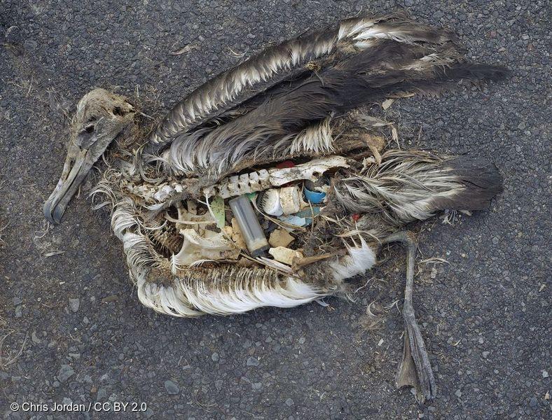 해양 생태계를 위협하는 일회용 플라스틱 쓰레기