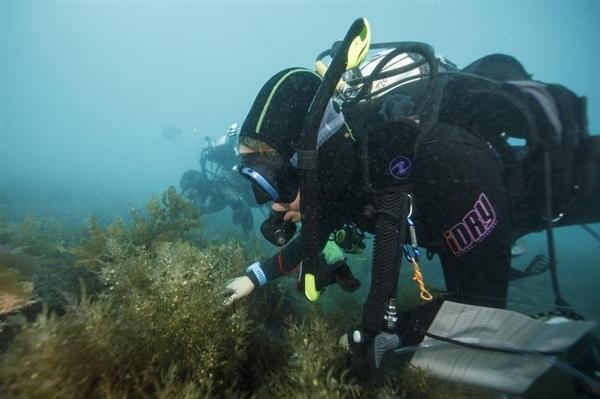 산호초조사