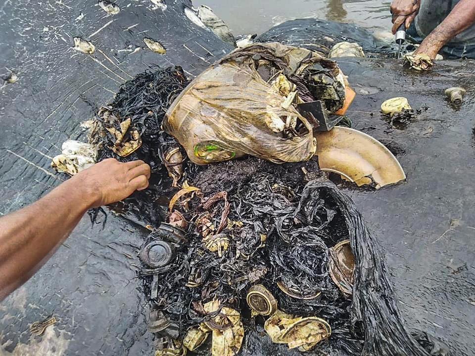 Ce n'est malheureusement pas un cas unique : Ce cachalot avec 6 kg de plastique dans le ventre a été retrouvé échoué sur une plage en Indonésie en novembre 2018.