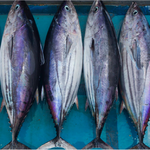 Greenpeace demands sustainability and due diligence on human rights for tuna industries in Southeast Asia