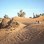 غرينبيس: الواحات المغربية تواجه خطر الزوال وعلينا التحرّك سريعاً لنجدتها!