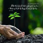 العطاء الأخضر…عمارة الأرض أمانة
