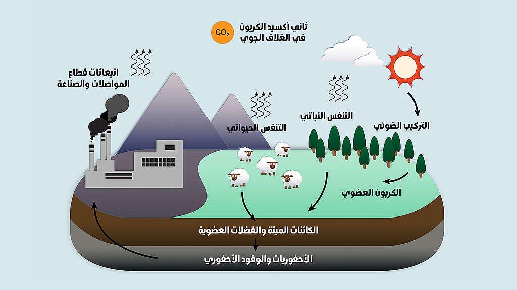 الكربون والحياة على الأرض توازن هش Greenpeace Mena
