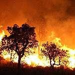 صيف حار وحرائق قاسية.. ما علاقة ذلك بتغير المناخ؟