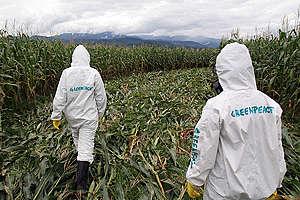 GE Crop Circle Action in Mexico. © Gustavo Graf