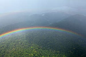 Coastal Rainforest in Cameroon. © Alex Yallop
