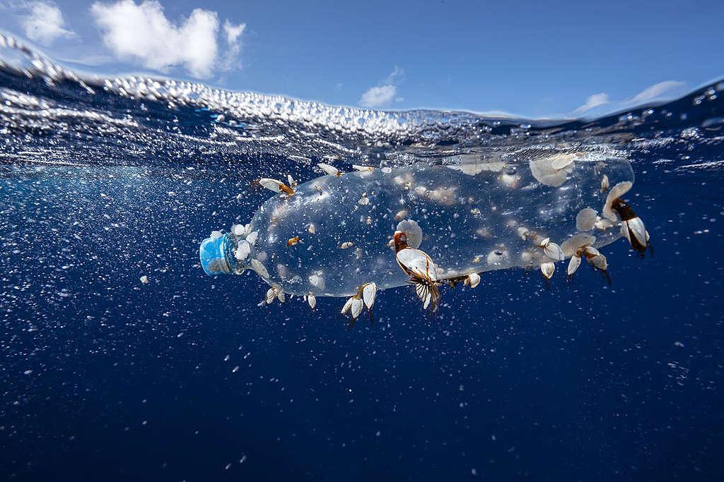 Botella plástica flotando en el océano © Justin Hofman / Greenpeace