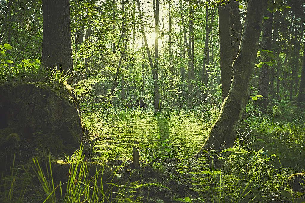 Bosques en el Día de la Tierra