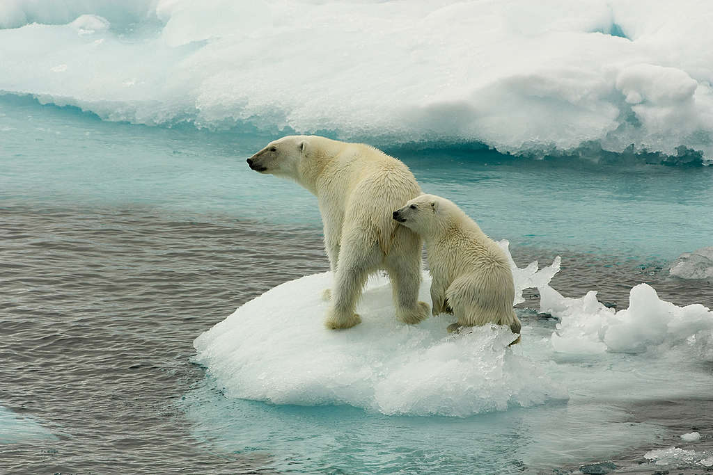 Cómo Nos Afecta El Calentamiento Global Greenpeace México