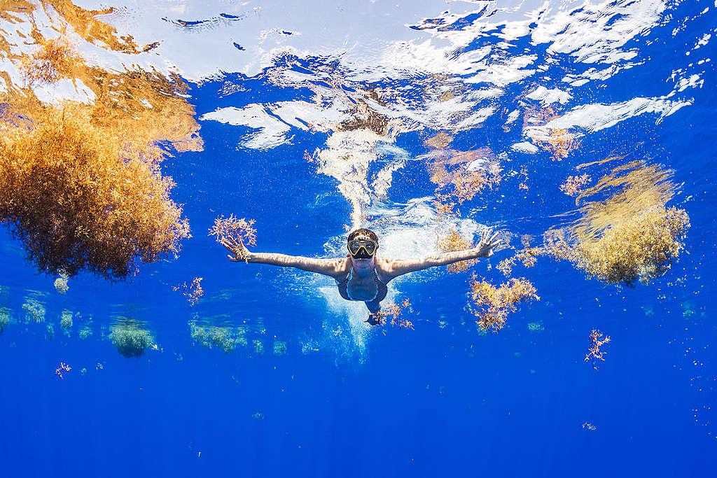 Protege Los océanos/ Shane Gross / Greenpeace