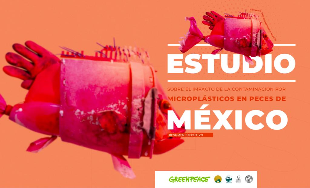 Estudio sobre el impacto de la contaminación por microplásticos en peces de México