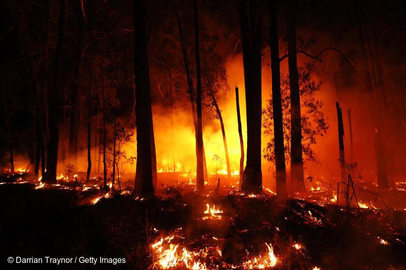 Incendios forestales en México y el mundo