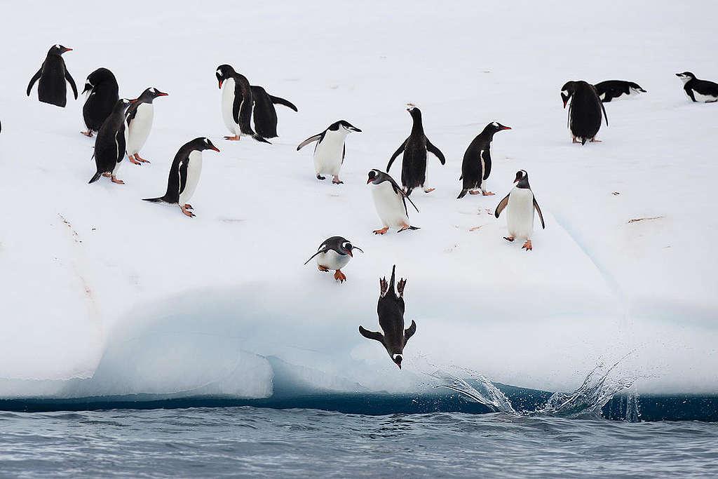 Pingüinos en la Antártida. ¿Cómo les afecta el cambio climático?