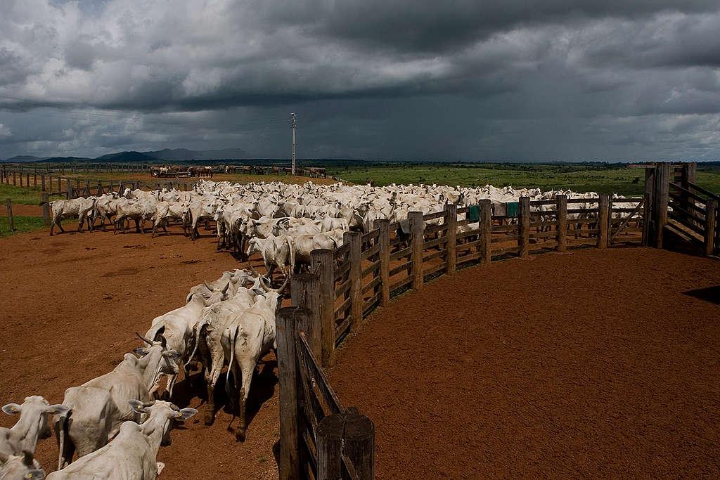 Rancho ganadero, ¿sabes de dónde viene la carne que comes?