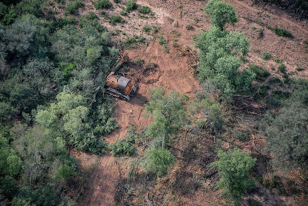 Deforestación en el mundo