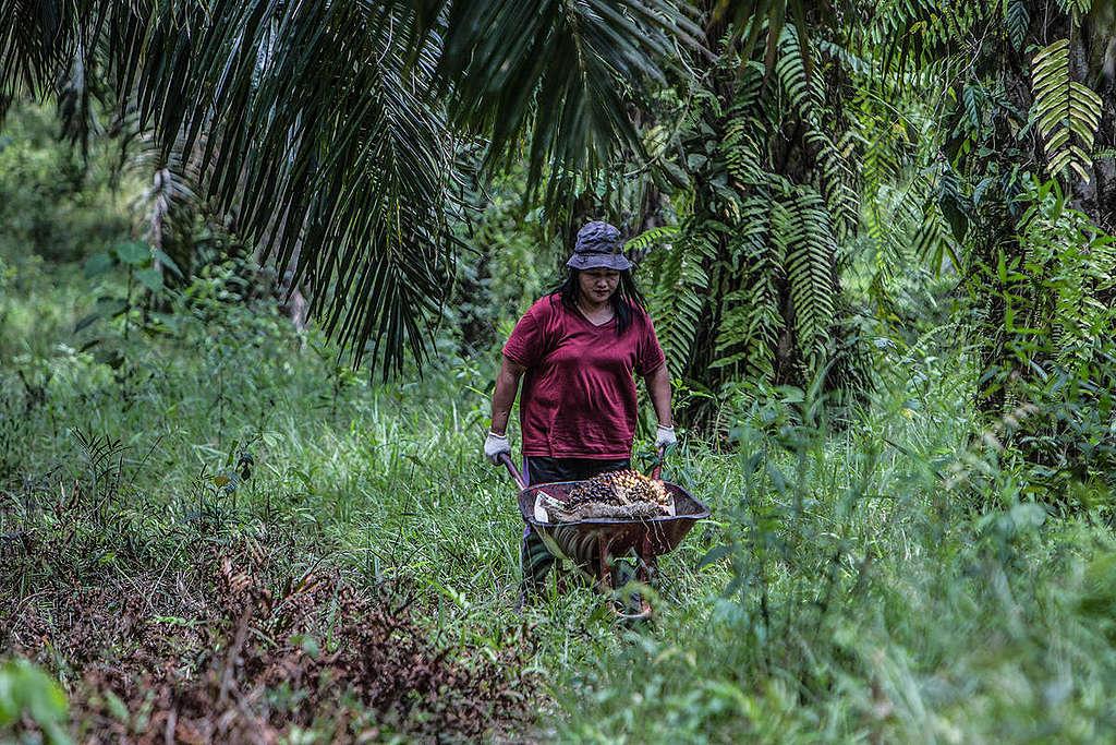 ¿Quién protege nuestros bosques y selvas?