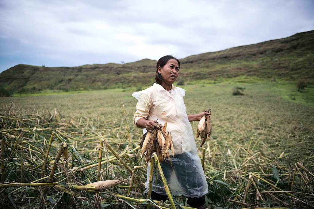 Mujeres en el campo