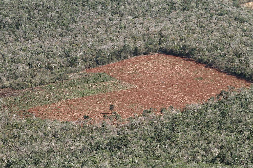 Deforestación en Mexico. © Victor  Garcia / Greenpeace