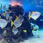 Protege la diversidad marina y los océanos del mundo