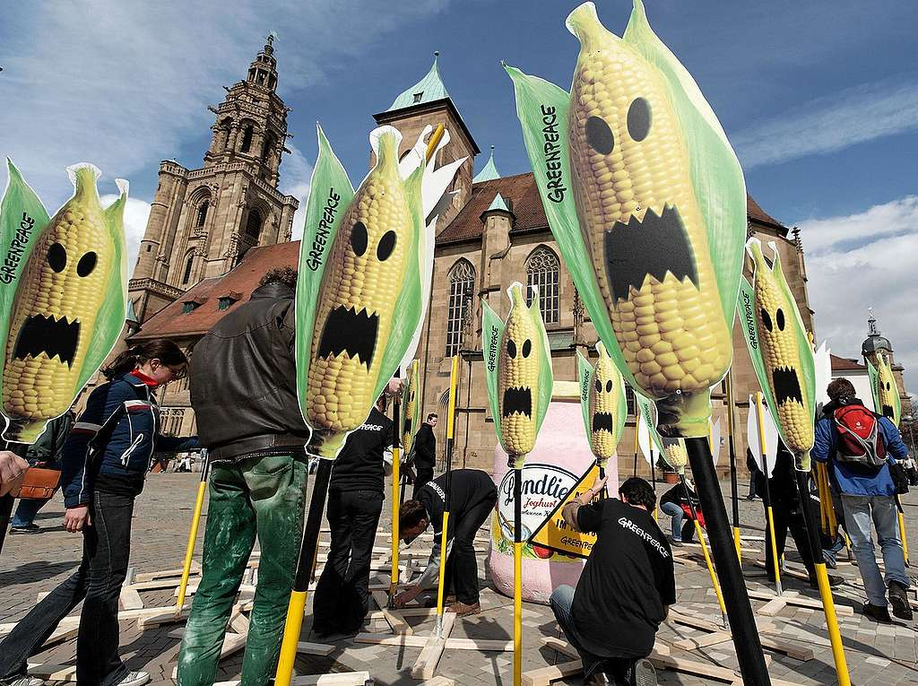 Greenpeace y la defensa del maíz contra Monsanto