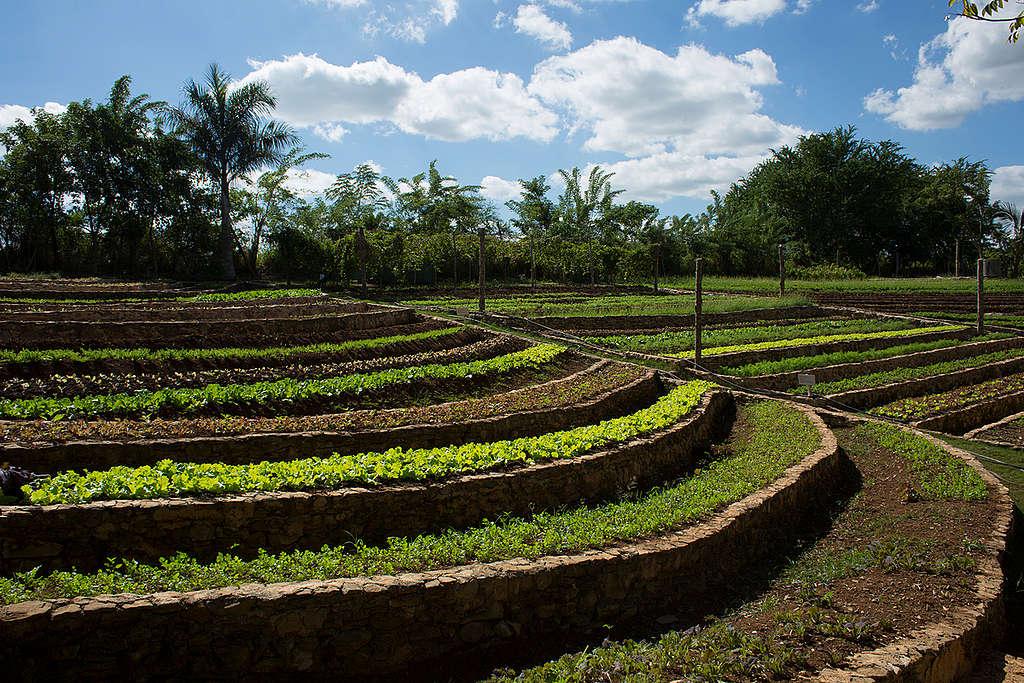 En Greenpeace te sugerimos buscar alternativas a la agricultura industrial. Cada vez hay más opciones locales en las que se practica la agricultura sin agroquímicos o sostenible